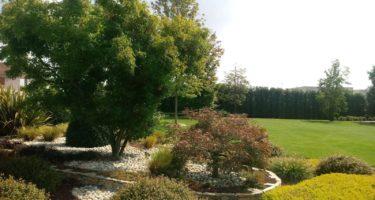 Gruppetto composto da Acer palmatum, erica ed Abelia.
