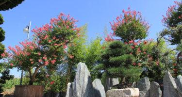 I monoliti sono un ottimo accompagnamento per esemplari di Lagerstroemia o bonsai.