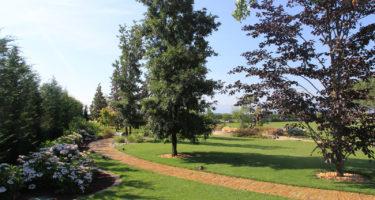 Le ortensie possono essere utilizzate per regalare colore negli angoli più ombreggiati del giardino.