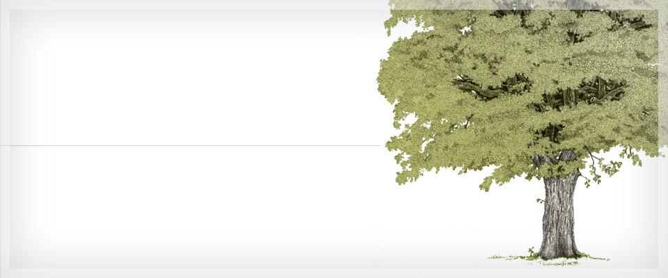 Alberi ornamentali e da giardino miretti vivai giardini for Costo alberi da giardino