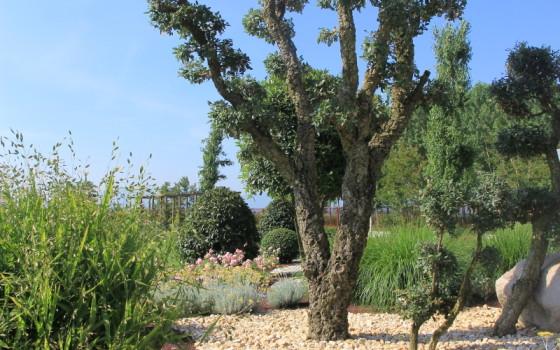 L 39 essenziale - Sughero pianta da giardino ...